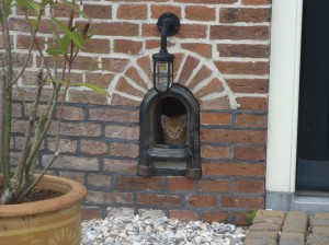 Huisdieren welkom - Lytshuis Zilver